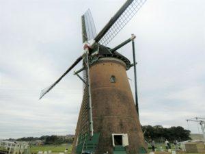 佐倉のオランダ風車