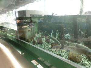 相模川ふれあい科学館の川ゾーン