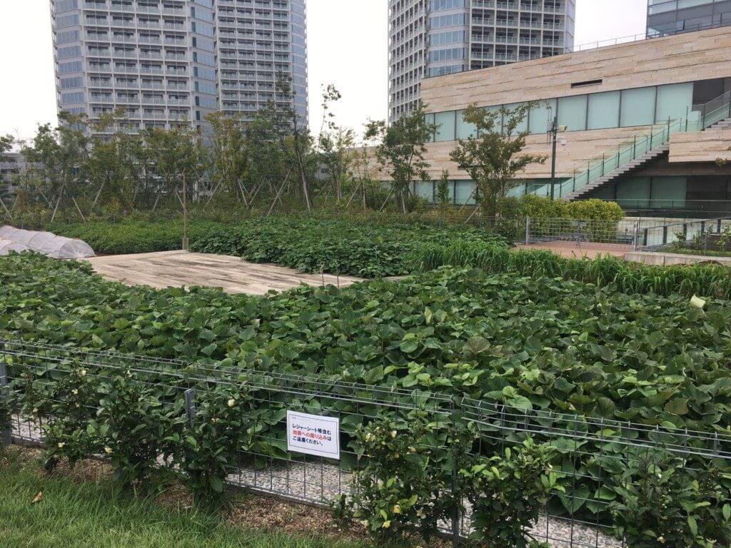 二子玉川の菜園広場